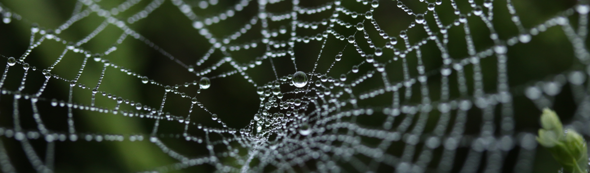 Spiderweb covered in water drops